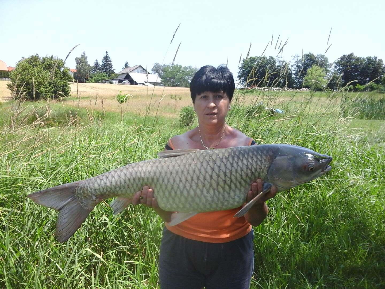 Jezero Radehova, uplenjen amut, teža 10 kg, uplenila Nada Lorenčič