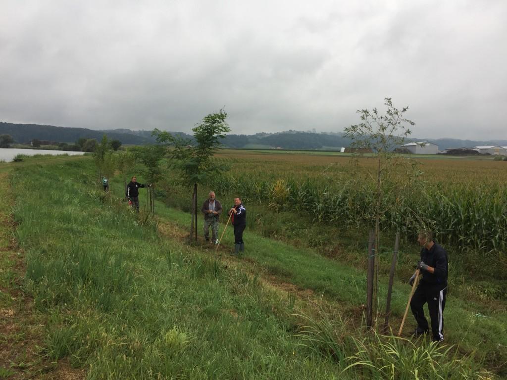 Urejanje drevoreda na ansipu jezera Radehova- delovna akcija 2. 2019.